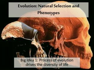 Evolution: Natural Selection and Phenotypes