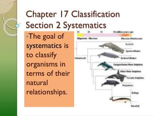 Chapter 17 Classification Section 2  Systematics
