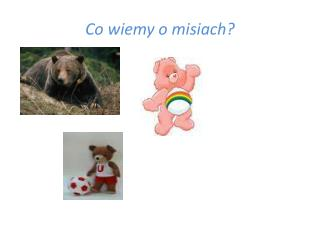 Co wiemy o misiach?