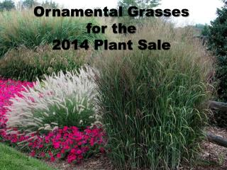 Ornamental  Grasses for the 2014 Plant Sale