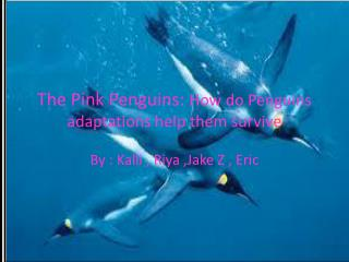 The Pink Penguins:  How do Penguins adaptations help them survive
