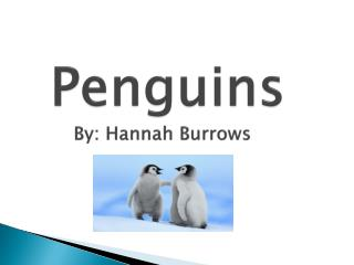 Penguins      By: Hannah Burrows