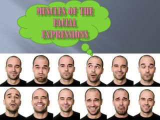 Muscles of the Facial Expressions