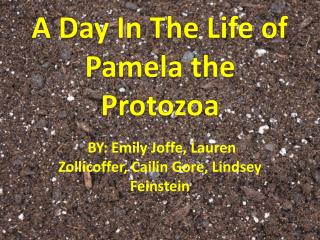 A Day In The Life of Pamela the Protozoa