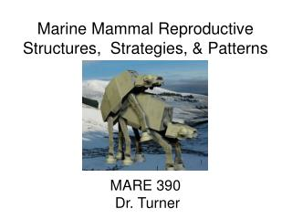 Marine Mammal Reproductive Structures,  Strategies, & Patterns MARE 390  Dr. Turner