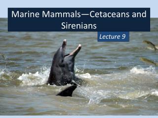 Marine Mammals—Cetaceans and  Sirenians