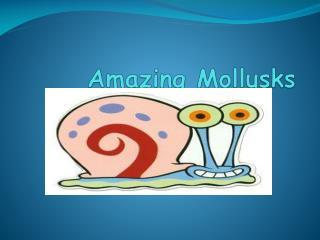 Amazing Mollusks