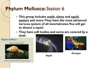 Phylum  Mollusca :  Station 6