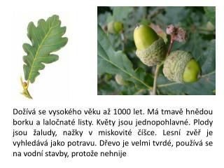 listnate stromy obr text