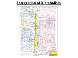 Integration of Metabolism