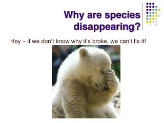 Why are species disappearing?