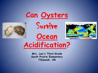Question : Can Oysters Survive                      Ocean Acidification ?