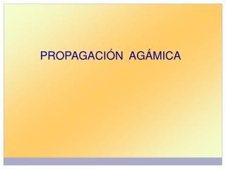 PROPAGACIÓN  AGÁMICA