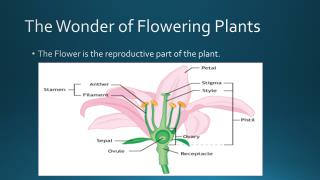 The Wonder of Flowering Plants