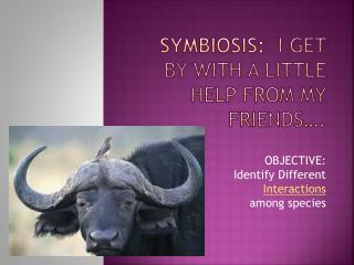 Symbiosis:   I get by with a little help from my friends….