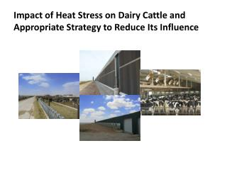 Impact of Heat Stress on Dairy Cattle and Appropriate Strategy to Reduce Its Influence