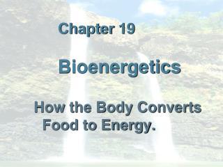 Chapter  19  Bioenergetics