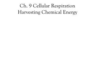 Ch. 9 Cellular Respiration Harvesting Chemical Energy