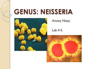 GENUS: NEISSERIA