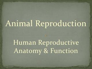 Animal  Reproduction Human  Reproductive Anatomy & Function