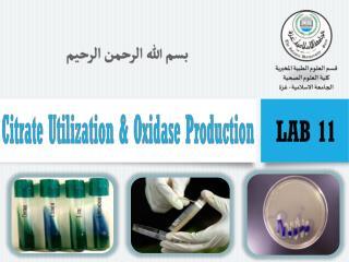 Citrate  Utilization
