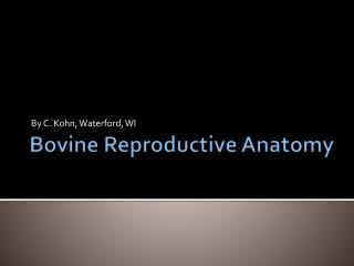 Bovine Reproductive Anatomy