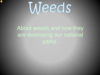 About weeds and how they are destroying our national parks.