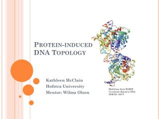 Protein-induced DNA Topology