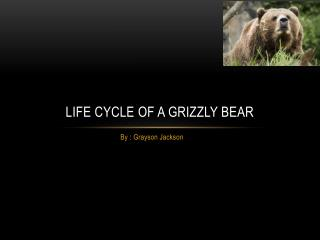 Life Cycle Of A Grizzly Bear