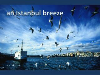 an  Istanbul breeze