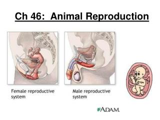 Ch 46:  Animal Reproduction