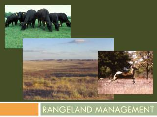 Rangeland Management