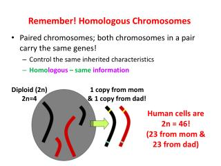 Remember! Homologous  Chromosomes