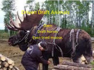Driven Draft Animals