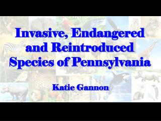 Invasive, Endangered and Reintroduced Species of Pennsylvania