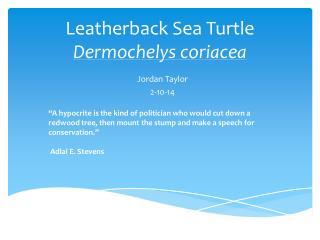 Leatherback Sea Turtle  Dermochelys coriacea