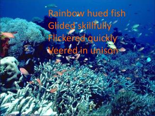 Rainbow hued fish Glided skillfully Flickered quickly Veered in unison