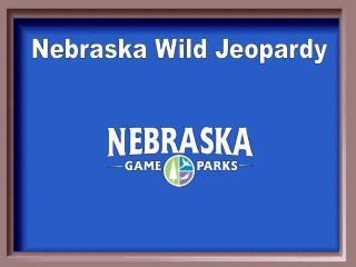 Nebraska Wild Jeopardy