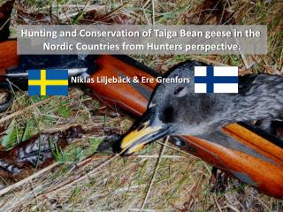 Hunting and Conservation of Taiga Bean geese in the  Nordic  Countries from Hunters perspective.