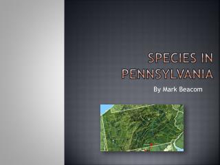 Species in Pennsylvania