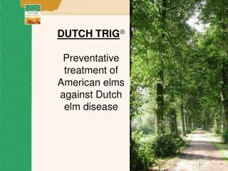 DUTCH TRIG    Preventative treatment of American elms  against Dutch elm disease