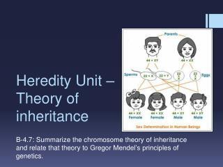 Heredity Unit – Theory of inheritance