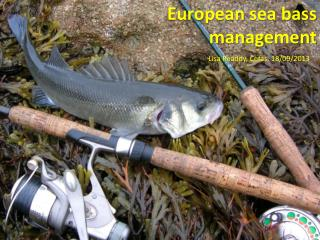 European sea bass management