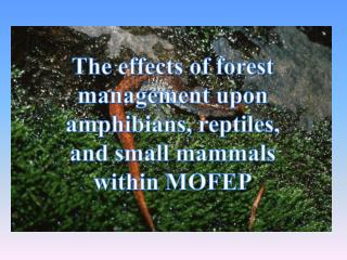 The effects of forest management upon amphibians, reptiles, and small mammals within MOFEP