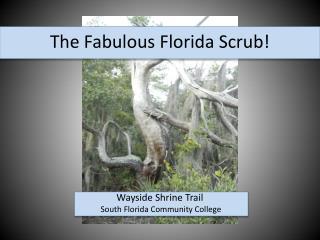 The  Fabulous Florida  Scrub!