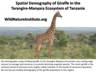 Spatial Demography of Giraffe in the  Tarangire-Manyara  Ecosystem of Tanzania