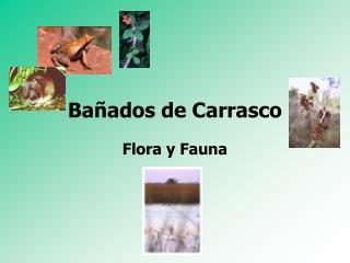 Ba ados de Carrasco