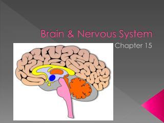 Brain & Nervous System