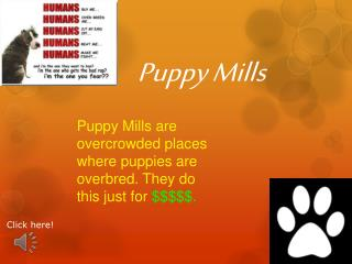 Puppy Mills are overcrowded places where puppies are overbred. They do this just for  $$$$$.