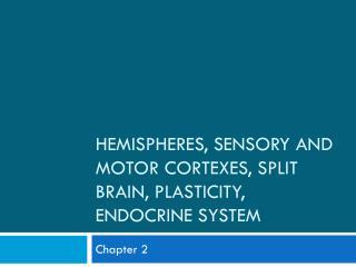 Hemispheres, Sensory and Motor Cortexes, Split Brain, Plasticity, Endocrine System